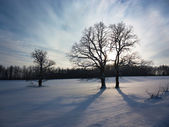 Winter Landscape with Snowy Field and Trees — Foto de Stock
