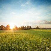 Summer Landscape with Green Field at Sunset — Stok fotoğraf