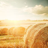 Summer Field with Hay Bales at Sunset — Stock Photo