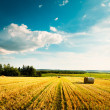 Summer Landscape with Mown Wheat Field and Clouds — Stock Photo #51619179