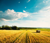 Summer Landscape with Mown Wheat Field and Clouds — Stock Photo