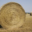 Many haycocks in the field — Stock Photo
