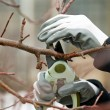 Man with gloves is cutting branches from tree — Stock Photo