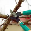Stock Photo: Cutting branches from tree with scissors