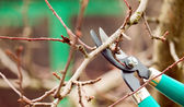 Cutting branches from tree with scissors — Stock Photo
