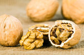Brown greek nut — Stock Photo