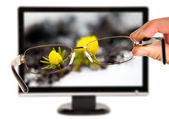 Man is viewing to yellow flower on display — Stock Photo