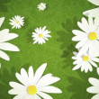 Summer Daisies Loop HD — Stock Video