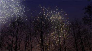 Fireworks kış ağaçların arkasında — Stok video