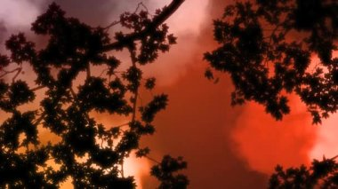 High definition animated background loop of stormy clouds moving over a vibrant red sky under a tree canopy