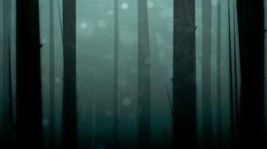 Spooky Forest Loop HD — Stock Video