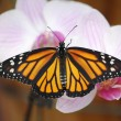 Butterfly on a flower orchid — Stock Photo