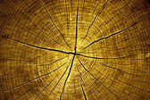 Tree cross cection — Stock Photo