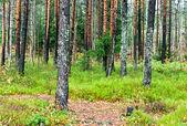 Autumn forest landscape. — Stock Photo