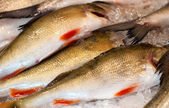 Fresh fish on ice. — Stock Photo
