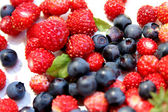 Forest berries — Stock Photo