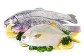 新鲜的鱼 — 图库照片