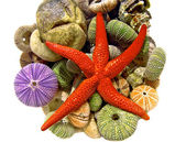 Starfish, seashells — Stock Photo