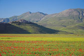 Castelluccio di Norcia in Umbria — Stock Photo