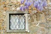 Window  and wisteria — Stock Photo