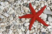 Starfish on pebbles — Stock Photo