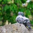 Two doves in love — Stockfoto