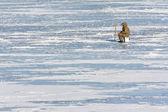 Fisherman on ice in winter — Stock Photo