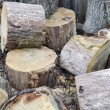 Firewood — Stock Photo #16181259