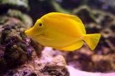 Peixes exóticos — Fotografia Stock