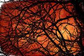 Fundo de folhagem multicolor — Fotografia Stock