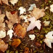 Leaves of the fall - Stock Photo
