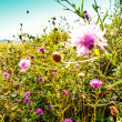 Beautiful view in summer flower — Stock Photo #29915621