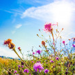 Summer flower (Forest of Flowers ) — Stock Photo #30839385