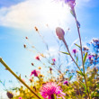 Beautiful view in summer flower — Stock Photo #31627813