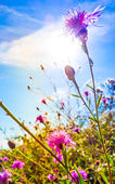 Beautiful view in summer flower — Stock Photo