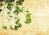 Многоцветная листва backgroun — Стоковое фото
