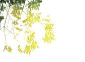 Multicolor laub backgroun — Stockfoto