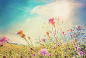 Vintage summer flower — Stock Photo