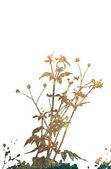 Texturas estilo floral isoladas no branco — Foto Stock