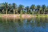Oil palm plantation — Stock Photo