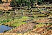 Vegetable plantation — Stock Photo