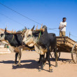 Zebu cart — Stock Photo