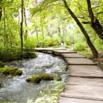 Plitvice lakes - wooden pathway. — Stock Photo #12888736
