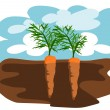 Stock Vector: Two carrots in the ground