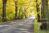 Autumn time - empty route. — Stockfoto