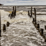 Gull on wooden waterbreak - Rewal. — Stock Photo