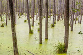 Thick forest in Poland. — Stock Photo