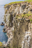大危险悬崖-latrabjarg、 冰岛 — 图库照片