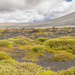 Volcanic landscape in Myvatn area - Iceland. — Stock Photo #18428709