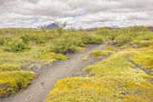Trekking path in Myvatn area - Iceland. — Стоковое фото